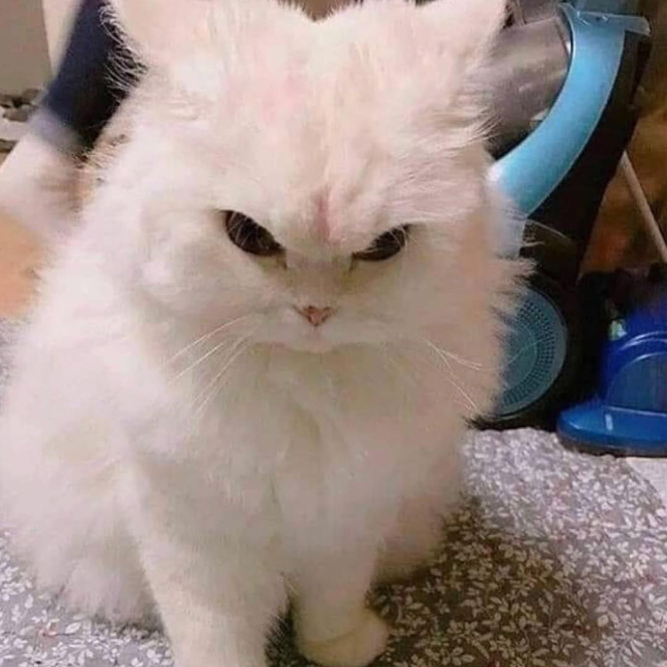 Ну и кто тут хозяин?: Мемы, которые показывают, что значит жить с кошкой